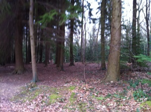 The Woods in February