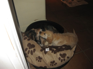 Keano not keen on sharing his bed with me when I was a pup!